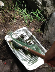 Teachers collected insects to evaluate pond health at Caumsett State Historic Park Preserve.
